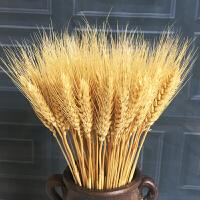 麦穗干花花束开业大麦田园装饰礼品拍摄道具稻穗干花真花
