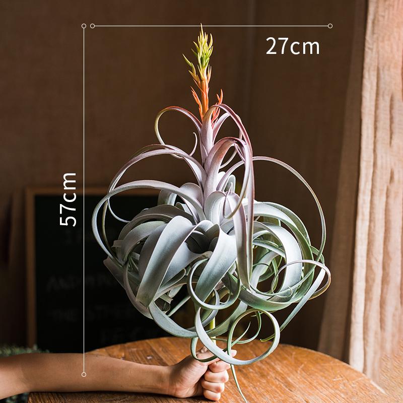 空气凤梨仿真花植物电烫卷另类陈列
