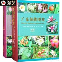 《广东植物图鉴》上下两册 中英文对照 维管束植物蕨类裸子被子景观设计工具书籍