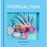 Tropical Fish 英文原版 热带鱼立体书 by David Hawcock