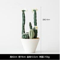 仙人掌盆栽仿真植物带盆假花植家居装饰 扁盆款 HLMS-001