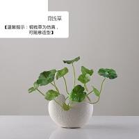 0516023809559 北欧创意台面水培花瓶摆件客厅插花装饰摆件简约现代陶瓷花瓶