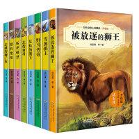全8册沈石溪动物小说系列全集 狮王忠诚的狮子狗 7-9-12-15岁儿童励志畅销书 三四五年级 六年级课外书必读 小学