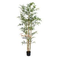 仿真竹子叶树样板房中式禅意风格园林景观室内落地绿植物紫竹盆栽