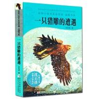 正版 一只猎雕的遭遇 动物小说大王沈石溪品藏书系 童书 中国儿童文学 动物小说 三四五六年级儿童小学生课外读物