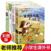正版名家儿童文学精选系列冰波王一梅童话故事全4册花背小乌龟雨街的猫恐龙6-7-8-10-12岁小学生