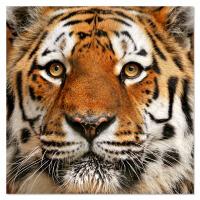 客厅装饰画现代简约老虎狮子狼猛禽无框壁画书房走廊过道门厅挂画 0*0 mm厚板 独立
