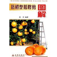 【二手旧书9成新】脐橙整形修剪图解 陈杰著 金盾出版社