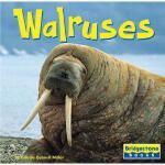 【预订】Walruses 进口原版 9780736843133