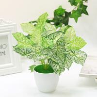 假花仿真花客厅绿植物装饰家居创意盆栽摆件室内摆设塑料花小盆栽 乳白色 海芋叶+大白