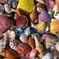 ?鱼缸水族箱装饰造景铺底砂套餐天然音乐海螺贝壳珊瑚石头沉木摆件 3斤白底砂