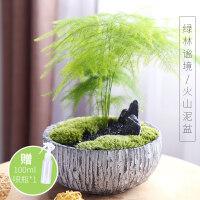 文竹盆栽植物室内花卉盆栽绿植净化空气绿色植物四季常青盆景 ju7