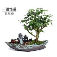 新中式禅意摆件玄关盆景办公室绿植盆栽室内植物节日*开业礼品
