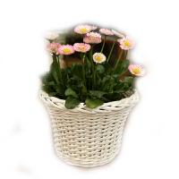 金柳家居田园迷你花盆 藤编花器花瓶创意收纳盒花篮 办公桌小花盆
