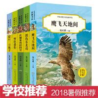 全套5册 中国动物小说品藏书系第2辑沈石溪 最后一只狍子+泯仇东北虎+野化猎豹+鹰飞天地间 9-12-13-15岁儿童