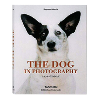 The Dog In Photography 1839-Today 摄影中的狗 1839-今日 艺术摄影作品书籍