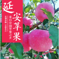 【包邮】延安宜川红富士苹果5斤装(75商品果)