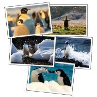 南极北极精美明信片