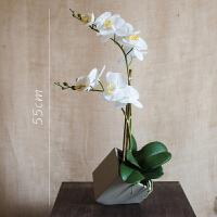 【】仿真蝴蝶兰盆景手感材质装饰摆件设计师几盒造型礼物