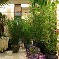 仿真竹子室内装饰隔断屏风假竹子仿真植物墙室外加密仿真竹子盆栽
