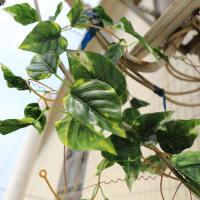 仿真绿枫叶红枫叶藤条壁挂空调管道吊顶装饰遮挡花藤蔓假树叶花藤