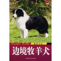 【新书店正版】边境牧羊犬智者为王 王晓 陕西科学技术出版社 9787536943575
