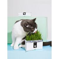 【支持礼品卡】懒人猫草种子无土壤水培种植套装小麦草猫薄荷零食 ie7
