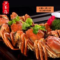 【全公】现货芦苇荡牌阳澄湖大闸蟹公蟹4.0两8只装礼盒鲜活螃蟹