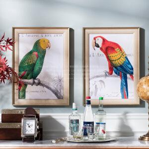 奇居良品 欧美式家居动物墙面装饰画挂画壁画客厅餐厅 鹦鹉手稿