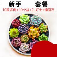 多肉植物种植新手套餐肉肉植物多肉组合盆栽绿植花卉送花盆送土ju6