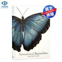 英文原版 Sensational Butterflies 奇妙的蝴蝶 精装手绘珍藏版 儿童自然百科绘本 英国小瓢虫Lad