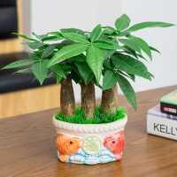 发财树盆栽植物四季好养室内小盆景易活桌面招财客厅水培绿植花卉