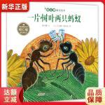 杨红樱童话绘本:一片树叶两只蚂蚁 杨红樱 文、【法】艾莲娜・勒内弗 图 9787539798035 安徽少年儿童出版社