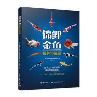 上海美影经典故事――崂山道士