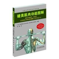 正版现货 健美肌肉功能图解 身体不同部位的训练方法 男生健康锻炼用书 运动健康书籍 肌肉拉伸 男生健身指南书籍 山东科