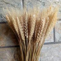 麦穗干花花束开业大麦田园装饰礼品拍摄道具干花真花麦子