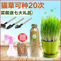 【支持礼品卡】猫草种子猫零食猫咪去毛球猫薄荷猫用品猫草种植套装麦子种子ie9