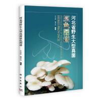 【二手旧书9成新】 河北省野生大型真菌原色图谱王立安 通占元科学出版社