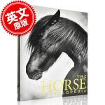 现货 DK 马的百科全书 英文原版 DK The Horse Encyclopedia 精装 大开本 by Elwyn