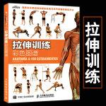 正版现货 拉伸训练 彩色图谱 健身训练教学书籍 肌肉拉伸书籍 体育健康锻炼教学 缓解肌肉关节疼痛一本教学就够 健身肌肉