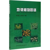 地被植物图谱 9787112086825 阮积惠、徐礼根 建筑工业