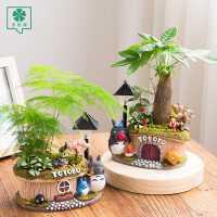 发财树盆栽小盆景文竹植物室内净化空气招财绿植四季常青微景观