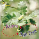 【预订】Acorn to Oak Tree