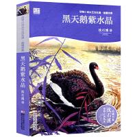 黑天鹅紫水晶 动物小说大王沈石溪品藏书系 沈石溪动物小说 一二三年级小学生课外阅读书 6-7-9-10-12岁青少年阅