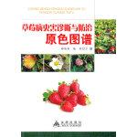 草莓病虫害诊断与防治原色图谱