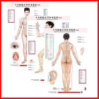 人体经络穴位标准挂图正侧背女性3张/套赠解说册家用中医美体针灸艾灸养生保健穴位图