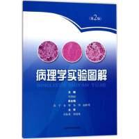 正版 病理学实验图解(第2版) 上海科技 何彦丽等 9787547835470 外科