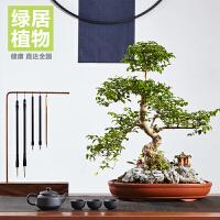 山紫甲造型盆景盆栽室内绿植花卉办公室植物*年货礼品