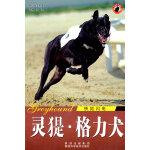 世界名犬-灵提格力犬
