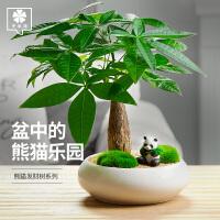 发财树盆栽绿植植物办公室客厅室内盆景好养花卉大小招财树金钱树